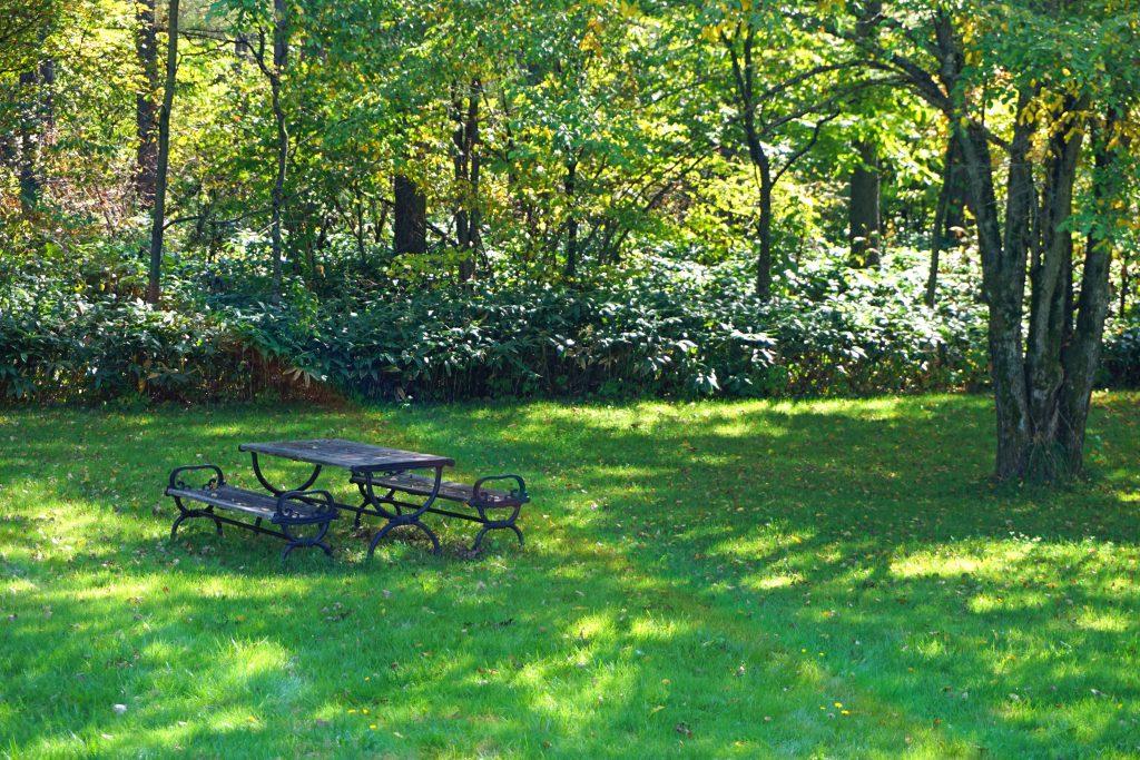 裏庭のテーブルとベンチ