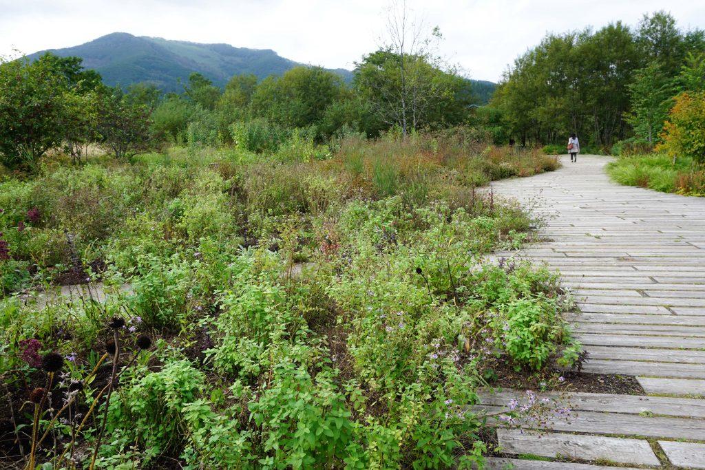 メドウガーデン/野の花の庭