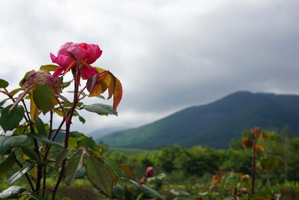 ローズガーデン/バラの庭