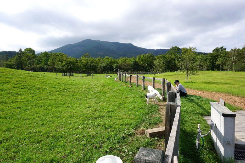 ヤギの放牧場