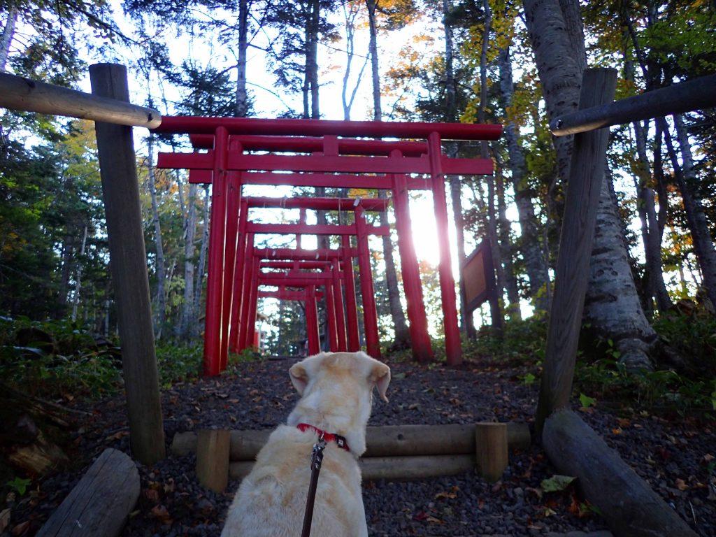 稲荷神社 登り口