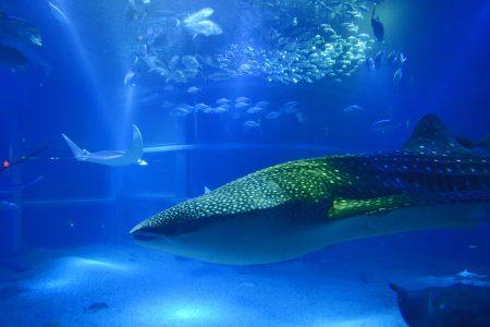 【二度目のUSJ②】世界最大級の水族館・海遊館に行ったさー♪